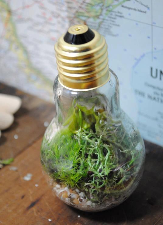 在一个密封玻璃瓶里生长了45年的植物!图片