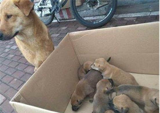 可爱小土狗10元一只,3天一只都没卖出去,狗妈妈的眼神