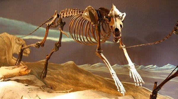 怪异的远古动物,这13种动物比恐龙更可怕