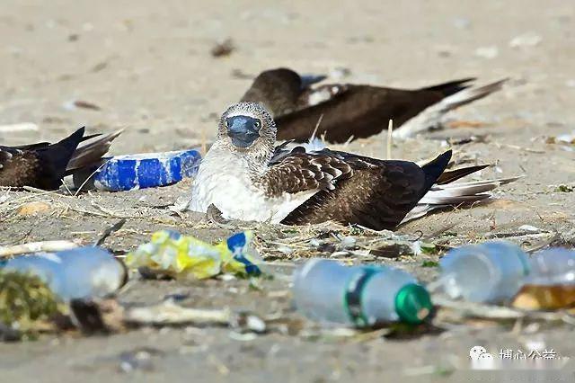 塑料危机:致数十万海洋动物死亡的污染