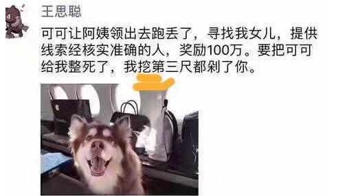 王思聪带爱犬乘坐私人飞机后王可可就丢了 花百万寻狗