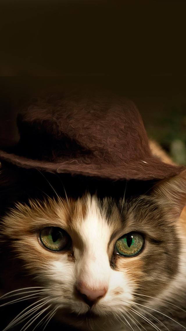 壁纸 动物 猫 猫咪 小猫 桌面 640_1138 竖版 竖屏 手机