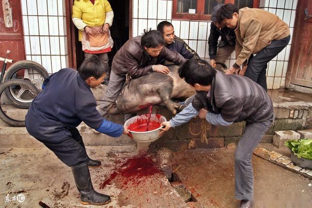 屠宰场杀猪常见的4种办法,农民朋友觉得哪种最好呢?