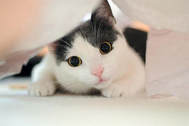 猫咪作为软萌的小动物,自然是获得了一大批铲屎官们的青睐.