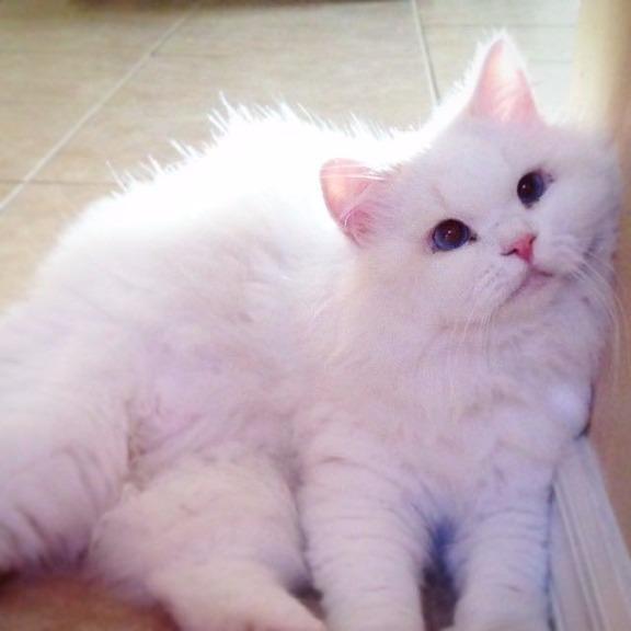 猫咪洋娃娃图片大全可爱