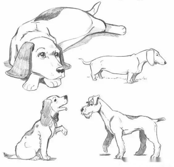 够你画2018一整年的动物速写教程!