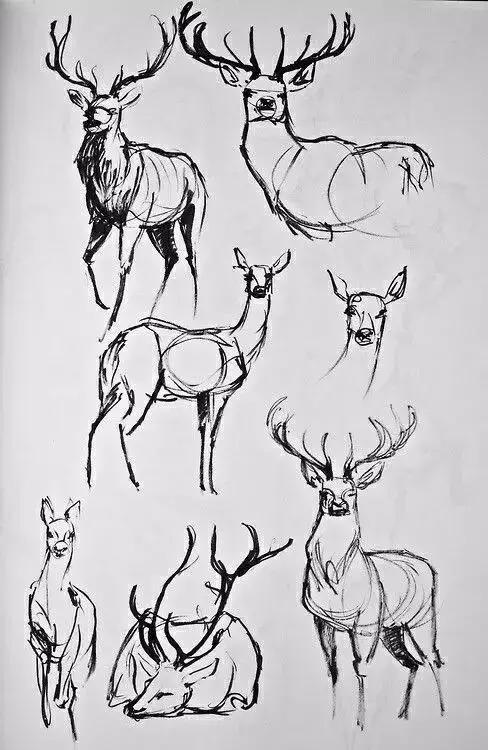 ▼ 04 · 大象的画法 · 笨重憨厚的大象,可爱极了 06 · 鹿的画法