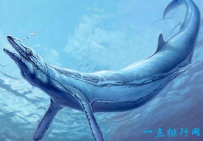 壁纸 动物 海洋动物 桌面 404_280