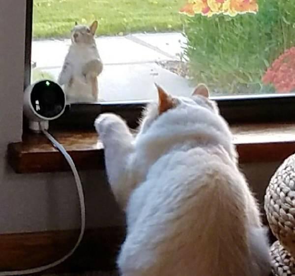 一只会引来森林里的小动物的猫,简直就是猫界白雪公主