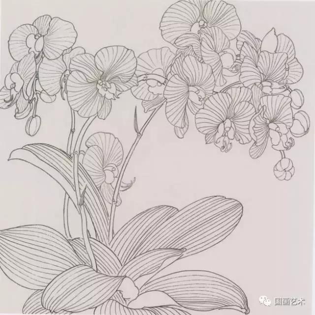 工笔画兰花画法步骤图解 工笔兰花勾线稿设色技法,比.