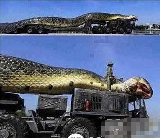 现今世界最大蟒蛇,亚马逊巨蟒