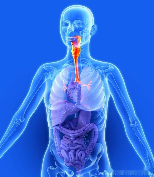 人体各脏器分布�_我们的免疫力到底来自于何处,各脏器在免疫力中的作用