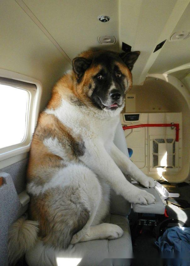 飞机上刚打开零食,就有一个黑鼻子探了过来:兄弟,给一