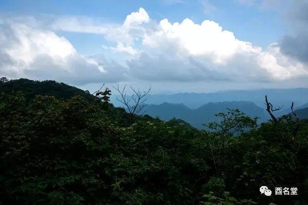 行走大坂营原始森林,是到木叶乡最不错的选择,该原始森林,被列为重庆图片