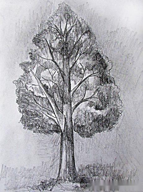绘画练习,如何用铅笔素描一棵大树,附详细步骤!