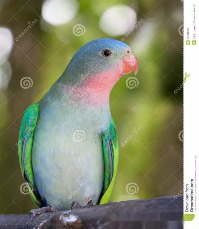 橡皮泥手工制作鹦鹉