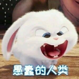 送你一波又萌又可爱的小白兔表情包