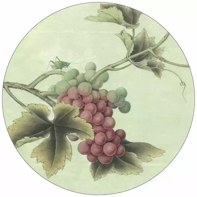 工笔画葡萄水珠画法,工笔葡萄画法染色步骤图解