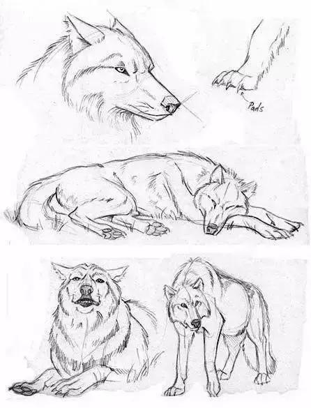 画一画它吧 ▼ 03 · 老虎的画法 · 画出来的老虎似乎也多份儿温柔