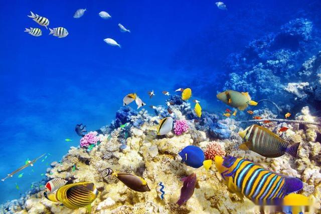 壁纸 海底 海底世界 海洋馆 水族馆 桌面 640_427