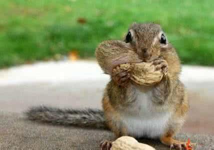 自然小课堂:猴子是怎么储存食物的?