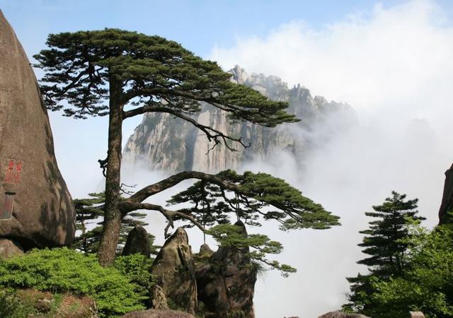 壁纸 风景 树 松 松树 640_450