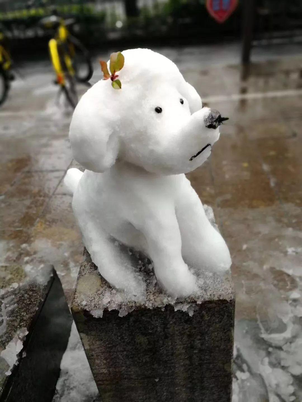 杭州保安下雪天堆出个动物园 网友:地域限制了才华 网络热点 第18张